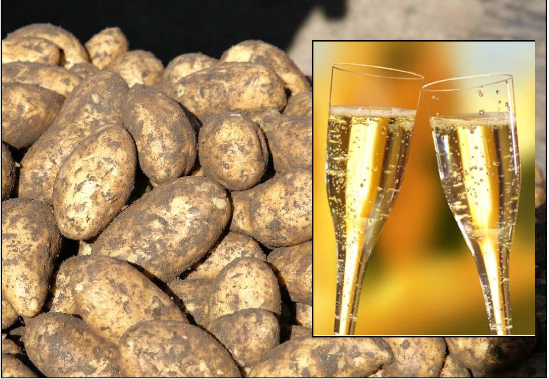 Fjellmandel og Champagne- kvalitet og utsøkt smak